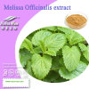 Nutramax -Melissa Officinalis Extract Powder (3%~5% rosemary acid)
