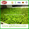 IQF Frozen Soybean in Shell Made in China