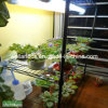 Adjustable Black Greenhouse Storage Metal Wire Shelving Rack