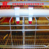 Jinfeng Good Quality Uganda Poultry Farm Automatic Chicken Layer Cage