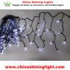 Black Wire Ce RoHS UL SAA Standard LED String Lights