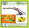 Kumquat/Orange/Lemon Grading Line
