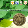 Top Quality Ginkgo Biloba Leaf Extract, Water Soluble Ginkgo Biloba Extract