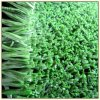 Used for Professional Hockey Field with Artificial Grass (CPG-18A)
