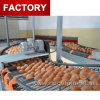 High Quality of Automatic Egg Collection System for Poultry Feeding Equipment