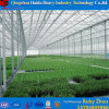 Hot DIP Galvanized Steel Durable Glass Greenhouse for Cucumber
