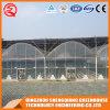 Multi-Span Garden Plastic Film Greenhouse