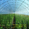 Tempered PVC/PE Film Greenhouse for Vegetable Plantation