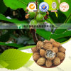 Natural Herbal Plant Raw Material Villous Amomrum Fruit