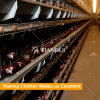 Auto feeding system chicken cage/full automated poultry battery cages used for laying hens