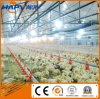 Chicken Poultry Farm Equipment with Prefab House in Low Price