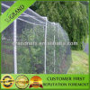 Green Low Price Agricultural Anti Bird Netting