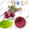 Food Pigment Beetroot Powder 10: 1