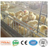 Best Design Durable Automatic a Frame Battery Pullet Chicken Cage