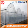 China Multi-Span Flower/ Vegetable Plastic Film Greenhouse