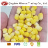 Export Standard Super Sweet Corn Kernels