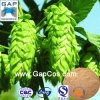 Hops Flower Extract with Free Sample
