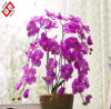 Artificial Faux DIY Bonsai PU Silk Real Touch Furnishing Butterfly Orchid