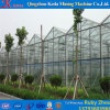 Multispan Hydroponics Glass Agricultural Green House for Cucumber