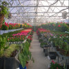 High Quality Solid Polycarbonate Multi-Span Greenhouse
