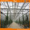 High Quality Long Term Use Multi-Span Glass Greenhouse