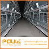 Automatic H Type Cage System for Layer Chicken