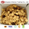 New Crop Chinese Fat Fresh Ginger