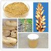 100% Natural Herbal Rhizoma Gastrodiae Extract