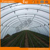 High Quality Tunnel Green House for Vegetable Planting