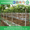 Pet Reflective Film for Grape Growing