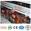 Hot Sale Layer Poultry Battery Cages for Nigeria Farms