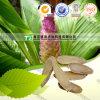 Herb Medicine Radix Curcumae Curcuma Aromatica