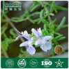 100% Natural Rosemary Extract Best Quality Lowest Price (NAT-163)