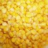 425g 340g Sweet Corn with High Quality Good Price (HACCP, HALAL, KOSHER, BRC, FDA)