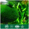 Naturalin Supply - Natural Chlorella Pyrenoidosa Extract 60% Protein