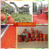 China Hot Sell Canned Vegetable