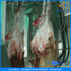 500sheep Per Shift Sheep Goat Lamb RAM Slaughter Equipment