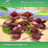 100% Natural Mucuna Extract (15%, 30%, 50%, 98% L-Dopa)