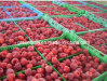 IQF Frozen Raspberries with Brc Standard