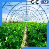 Arched PE Film Low Price Vegetable Greenhouse