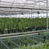 The New High Tech Agricultural Film Greenhouse for Vegetable Growing