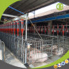 Factory Price Hot DIP Galvanzied Pig Gestation Stall for Sale
