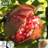 Factory Supply 100% Natural Pomegranate Seeds Extract Polyphenols 40%-80%