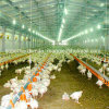 Full Set Automatic Poultry Equipment for Broiler House