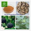 Acanthopanax Extract, Manyprickle Acathopanax Root Extract, Siberian Ginseng Extract