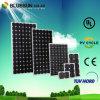 Bluesun China Photovoltaic Solar Panel Trading Company (Mono/Poly)