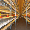 Automatic Chicken Cages for Broiler House
