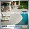 China Natural Stone/Granite for Swimming Pool Coping/Pool Coping