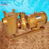 Swimming Pool Filter Water Swimming Pool Pump