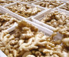 Air-Dry Ginger New Corp Low Price